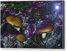 Magic Mushrooms Acrylic Print by Barbara S Nickerson