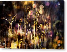 Magic Of Spring Acrylic Print