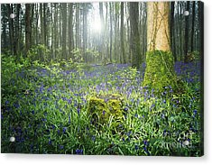 Magical Bluebell Forest In Kildare Ireland Acrylic Print by Catherine MacBride