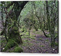 Acrylic Print featuring the photograph Magical Forest by Hugh Smith