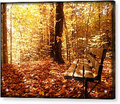 Magical Sunbeams On The Best Seat In The Forest Acrylic Print by Chantal PhotoPix
