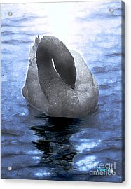 Acrylic Print featuring the digital art Magical Swan by Dale   Ford