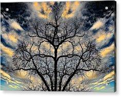 Magical Tree Acrylic Print by Hakon Soreide