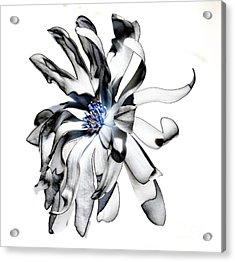 Magnolia Bloom Acrylic Print by Mark McReynolds