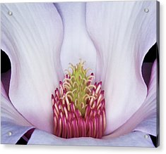 Magnolia Impression Number 2 Acrylic Print