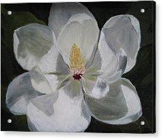 Magnolia Acrylic Print by Iris Nazario Dziadul