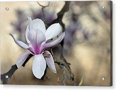 Magnolia One Acrylic Print