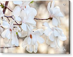 Acrylic Print featuring the photograph Magnolia Spring by Susan Cole Kelly