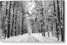 Maine Deep Woods Acrylic Print by Christy Bruna
