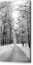 Maine Deep Woods Tall Trees Acrylic Print by Christy Bruna