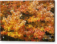 Maine'safall Leaves Acrylic Print by Charles  Ridgway