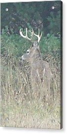 Majestic Buck Acrylic Print
