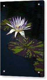 Majestic Acrylic Print by Elsa Marie Santoro