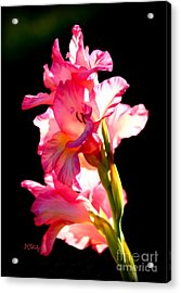 Majestic Gladiolus Acrylic Print