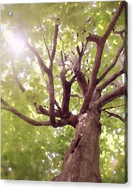 Acrylic Print featuring the photograph Majestic Maple by Brooke T Ryan