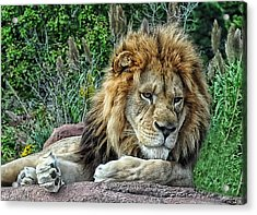 Majestic Acrylic Print by Tazz Anderson