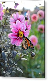Acrylic Print featuring the photograph Making Things New by Michael Frank Jr