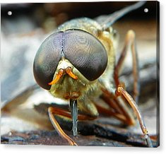 Acrylic Print featuring the photograph Male Horse Fly by Chad and Stacey Hall
