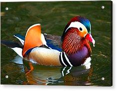 Male Mandarin Acrylic Print by Paul Marto