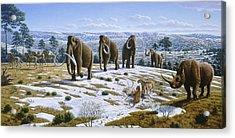 Mammals Of The Pleistocene Era Acrylic Print