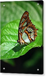 Man In Green Acrylic Print by Amee Cave