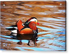 Mandarin Duck Acrylic Print by Juan  Cruz