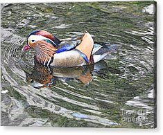 Acrylic Print featuring the photograph Mandarin Duck  by Lydia Holly