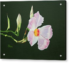 Acrylic Print featuring the painting Mandevilla Reaching Out by Jimmie Bartlett