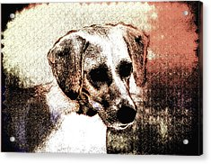 Mans Best Freind Acrylic Print by Bill Cannon