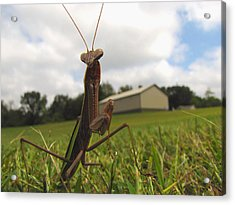 Acrylic Print featuring the photograph Mantis by John Crothers