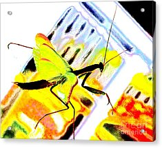 Mantis Acrylic Print by Xn Tyler