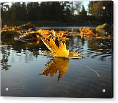 Maple Leaf Floating In River Acrylic Print