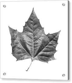 Maple Leaf Acrylic Print
