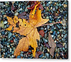 Acrylic Print featuring the photograph Maple Leaf On The Rocks by Tikvah's Hope