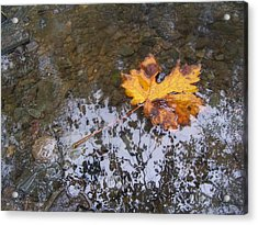 Maple Leaf Reflection 3 Acrylic Print by Peter Mooyman