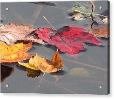 Maple Leaf Reflection Acrylic Print