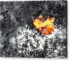 Maple Leaf Selective Color Acrylic Print by Peter Mooyman