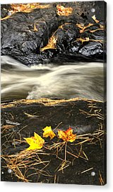 Maple Leaves And Water Acrylic Print by Douglas Pike