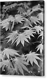 Maple Leaves In Seoul Acrylic Print by Julie VanDore