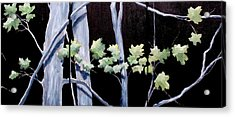 Maples In Moonlight Acrylic Print by Diane Daigle
