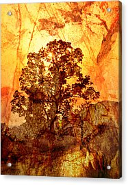 Marbled Tree Acrylic Print by Marty Koch