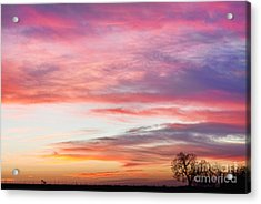 March Countryside Sunrise  Acrylic Print by James BO  Insogna