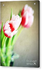 March Tulips Acrylic Print by Darren Fisher