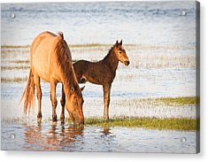 Mare And Foal Acrylic Print by Bob Decker