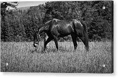 Acrylic Print featuring the photograph Mare In Field by Davandra Cribbie