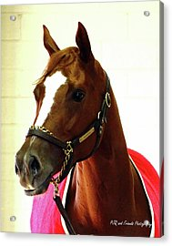 'marigo In Red' Acrylic Print by PJQandFriends Photography