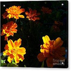 Acrylic Print featuring the photograph Marigold Sunrise by Jim Sauchyn