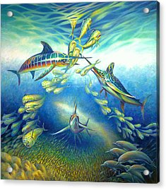 Marlin Frenzy Acrylic Print by Nancy Tilles