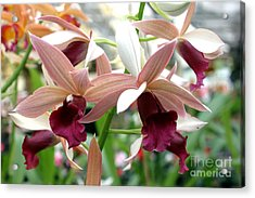 Acrylic Print featuring the photograph Maroon Bloom by Debbie Hart