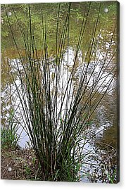 Acrylic Print featuring the photograph Marsh Grass by Renee Trenholm